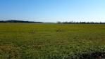Zbudovská Blata mají také název Svobodná. Druhý název souvisí s privilegiì v užívání podmáčené půdy, kde se klasickým zemědělským plodinám nedařilo.