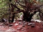 Zajímavé byly i věkovité stromy s rozložitými korunami.