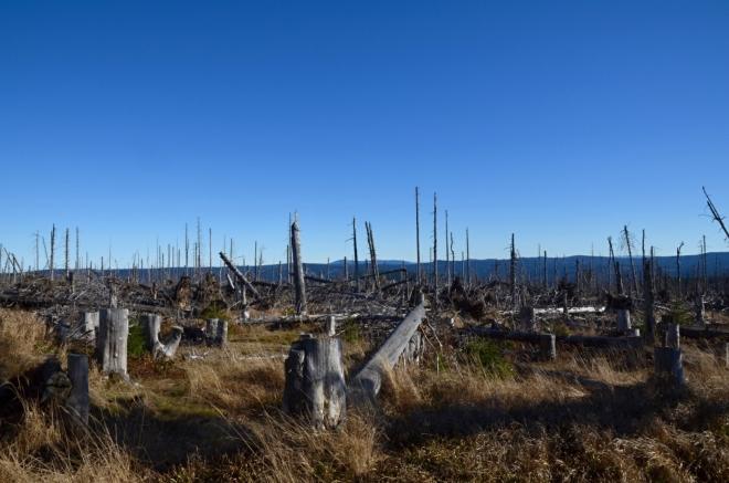 Kde jsou ty mladé stromy? Za kolik století se vrátí divočina a původní klimaxový les? A vrátí se vůbec někdy? Tyto otázky zodpoví až daleká budoucnost.