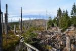 Vrcholové partie Šumavy kůrovcová kalamita změnila k nepoznání. Miliony mrtvých stromů, to je velká lekce za nicnedělání.