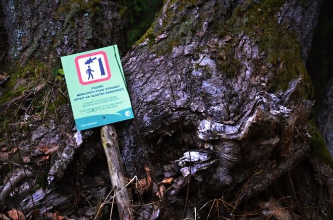 To je jediné, co lze dnes dělat? Kdy budou ti, co se přivazovali k napadeným stromům, sázet mladé buky, jedle či mladé smrky?