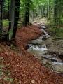 Potok si razí cestu a uhnout se dá jen na málo místech.