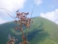 Pohled na Stoh nás utvrdil v tom, že se vrcholu (já už potřetí) vyhneme a traverz do sedla Medziholie nás zachrání.