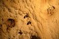 Vrápenci malí jsou v jeskyních Moravského krasu častými hosty. I díky jejich přítomnosti v době zimního spánku jsou jeskyně do března uzavřeny. Výjimkou jsou pouze Punkevní jeskyně, otevřené po celý rok.
