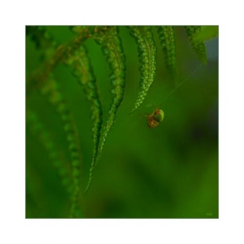 OSAMĚNÍ PROVAZOLEZCE, jen letmý dotek lůna přírody...