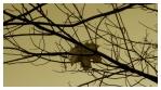PODZIMNÍ VÁNEK zahnal poslední z listů javoru do spleti usínajících siločar šedivého dne.
