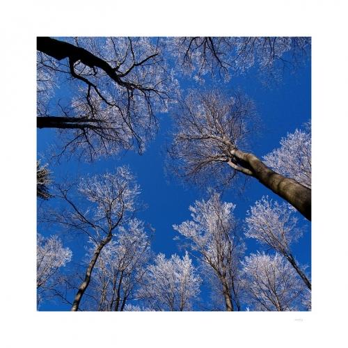 ZÁVRAŤ která vábí, závrať která láká, vznést se tam, ke korunám postříbřených buků a výš, do nebes...