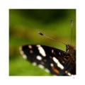 LEHKOST KŘÍDEL motýlích, má v sobě každý z nás. Stačí jen zavřít oči a vplout do barevného světa letních vánků a rozkvetlých, vonících luk.