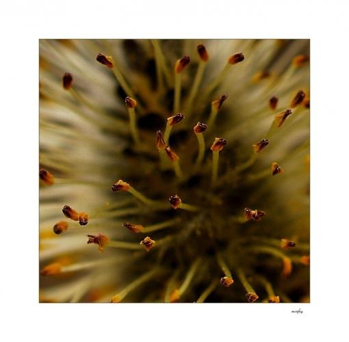 TANEC KOBŘÍCH TĚL, zmítajících se v prvních hřejivých paprscích jarního slunka, je dokonalý, jako příroda sama.