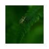 SMARAGDOVÉ TICHO, svět klidu a míru ukrytý hluboko v lesích, pod zelenými výhonky kapradin...