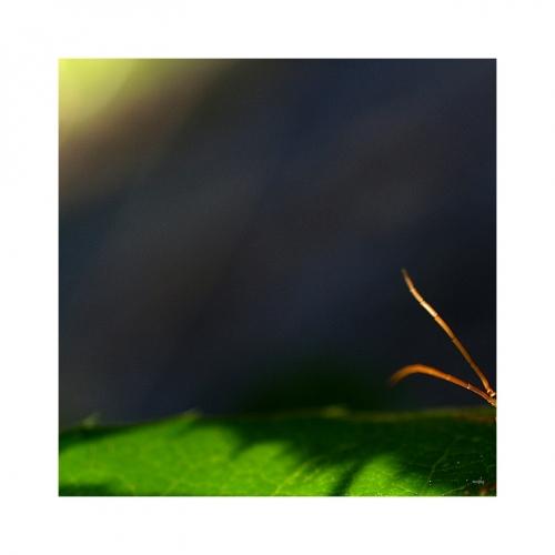 SLUNEČNÍ VÍTR pronikl z vesmíru zemskou atmosférou, aby se zastavil o zelený list a tykadla malého broučka.