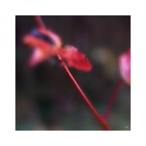 PODZIMNÍ MOTÝLCI se vznáší prostorem a svojí barevností ruší listopadovou šeď.