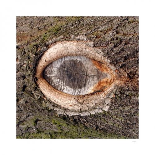 PROČ STROMY PLÁČÍ nevím, snad je to proto, že nikdy ve svém dlouhém životě nepotkaly Stromovouse...