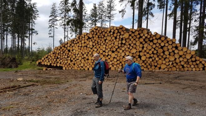 Šumavské lesy mizí. Kvůli kůrovci se všude, kde se smí, těží.