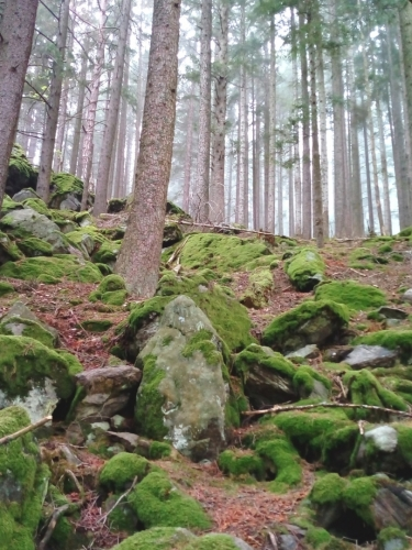 keltský les