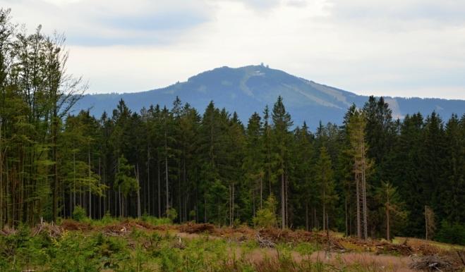Sestup z vrcholu Zámeckého lesa k Debrníku odhalil nejvyšší vrchol Šumavy, Velký Javor.
