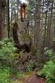 Na cestě od Špičáckého sedla k Černému jezeru kdysi stála na tomto místě dřevěná kaplička.