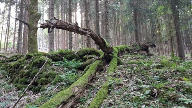 Poslední vrchol zdolám bez Venci, který na Jedlové již byl.