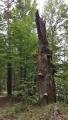 Pralesovitý bukový les pod Můstkem skrývá skvosty.