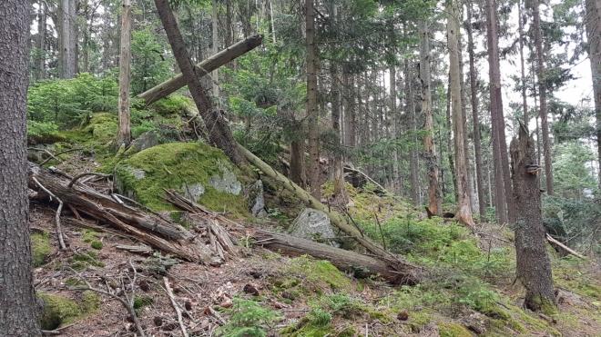 Hřeben má vrcholy dva, ten druhý je sice nižší, zato skalnatý a s přírodním křížem.