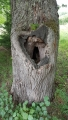 Tenhle strom sice není vrbou, ale vojáci pohrsniční stráže se do něho vymluvit klidně mohli.