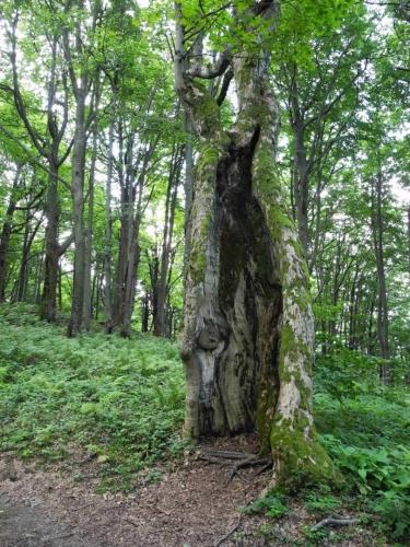 Blesky často ničí zdejší stromy.