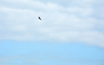 Orel monitoruje svým ostrým zrakem krajinu pod sebou a užívá si volnost, kterou mohou vnímat pouze ptáci.