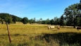 Pastviny Zadní Zvonkové...