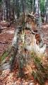 U Kopky dominuje prales.