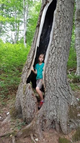 Ema ve vypeném stromu po zásahu blesku.