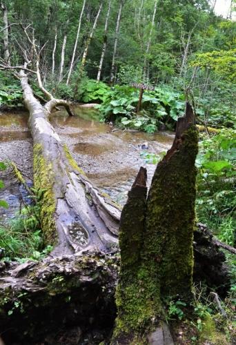 Prales u Biogradského jezera...