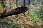 Pralesovitý charakter hor způsobuje nedostupnost skalnatých partií.