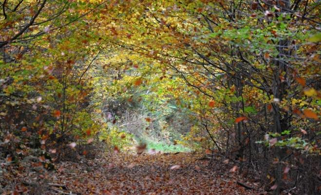 Větrný poryv sráží k zemi bukové listí.