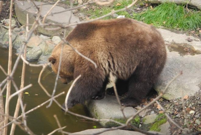 Medvědí výběh u hradu.
