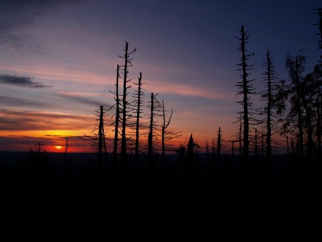 Napadne mě udělat fotky i přes torza lesa a tak rychle scházím níž. Barvy se pomalu ztrácí, začíná parný a pro nás, jak se ukáže, i perný den.