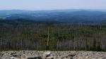 A pohled požraným lesem do Bavor.