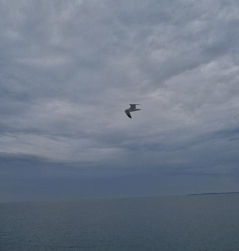 Náš ptačí průvodce