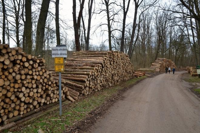 Těžbu lesů si odskákalo i okolí Zvíkovského hradu.