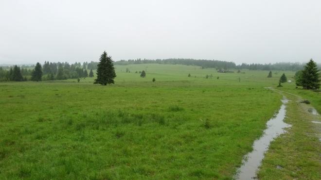 Zamokřená cesta k vrcholu Nad Rýžovnou.