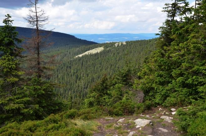 Suťové pole u červené turistické stezky vedoucí na vrchol Kralického Sněžníku leží pod. Vlaštovčími kameny jsou tvořeny svorem a rulou s příměsemi křemenců.