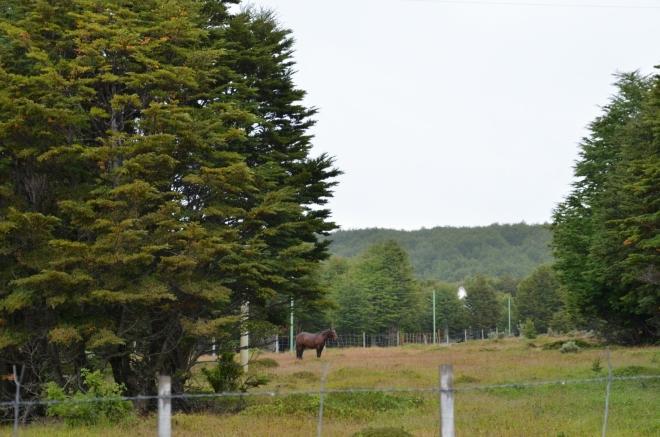 Louka s koněm
