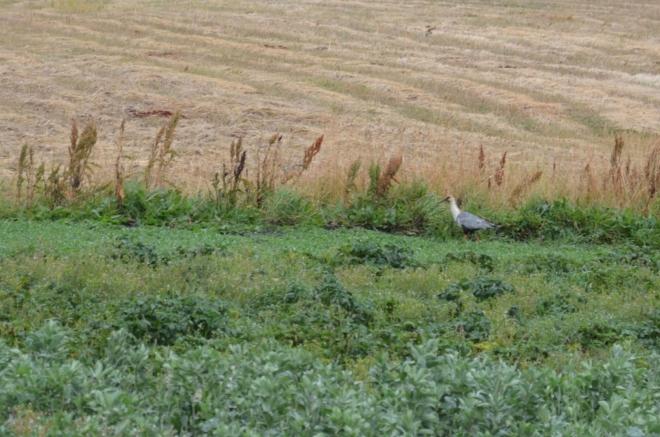 Pták s dlouhým zobákem