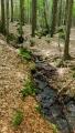 Černý potok se nazývá Čerchovka. Po výjezdu od Pece mne čeká pohodlná cesta lesem k Caparticím.