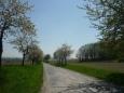 Silnice, směr Slaník, lemována rozkvetlými stromy (foceno v dubnu)