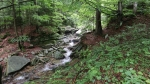 Poniklý potok...
