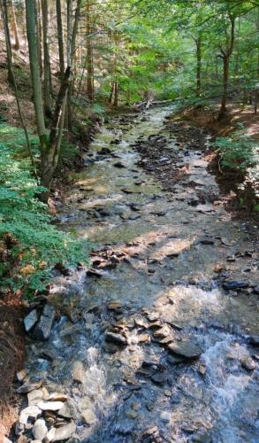 Jeden z několika přítoků Rudohorského potoka.