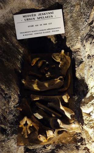 Kosti medvěda jeskynního sem byly sice zapůjčeny, ale nejrůznějších nálezů z minulosti vydala jeskyně dost.
