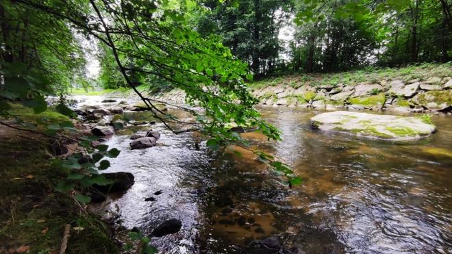Vidnávka sbírá prameny až pod Studničním vrchem u Jeseníku.