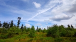 Hřeben u Můstku přišel o vzrostlý les.