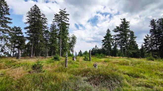 Vrchol Habru je jednou z mnoha šumavských tisícovek.